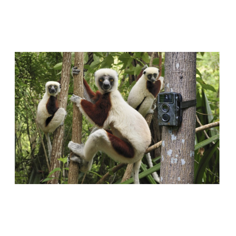Κάμερα Παρακολούθησης Άγριων Ζώων για Κυνηγούς Nature Wild Cam Technaxx TX-69