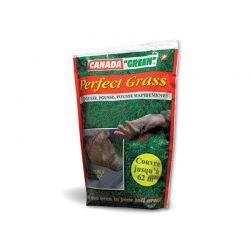 Σπόρος για Γκαζόν 1 Kg Perfect Grass SPM 40040146