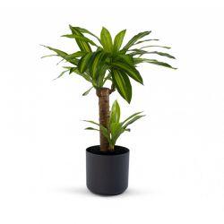 Τεχνητό Φυτό Δράκαινα 80 cm SPM 40080817